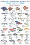 LAMINA PECES CANARIAS. FISHES / FISCHE